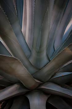 Yucca  by Mary Nash-Pyott