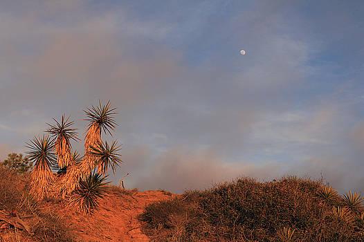 Yucca Moon by Robin Street-Morris