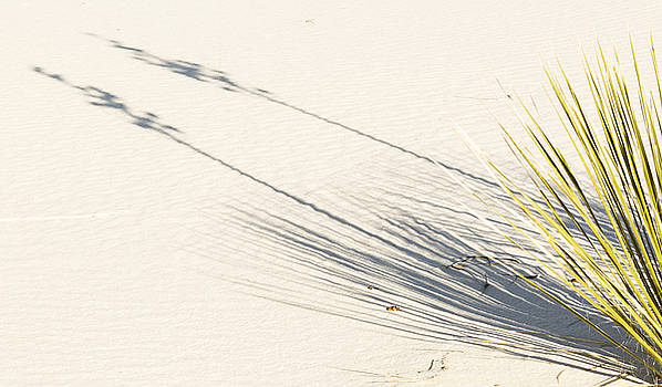 Yucca Shadow by Focus On Nature Photography