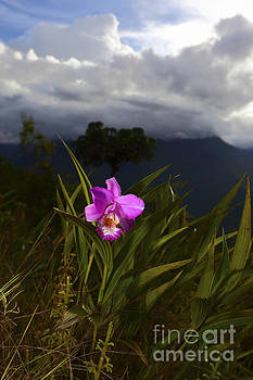 James Brunker - Yungas Orchid Bolivia