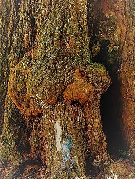 Z Z In A Tree by Randy Sylvia
