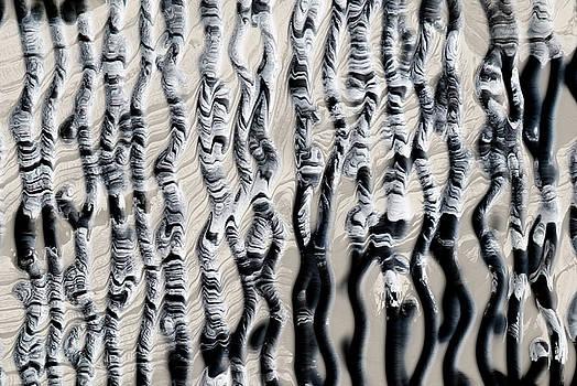 Zebra black and white pattern by Yulia Kazansky