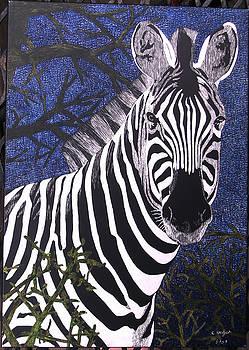 Zebra by Chris Hedges