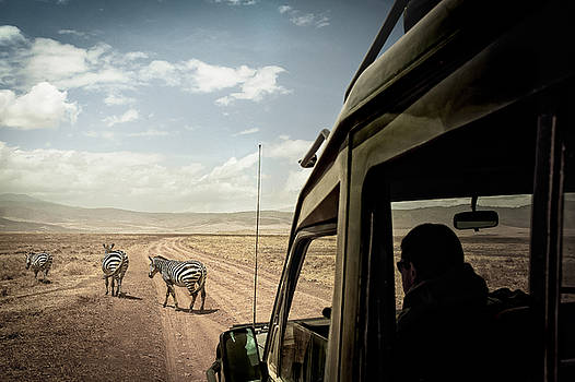 Zebra Crossing  by Justin Carrasquillo