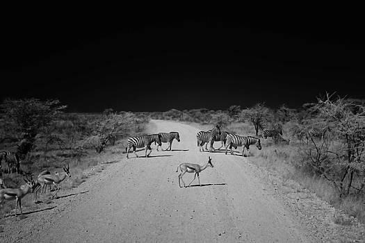 Zebra Crossing by Sander Hunter