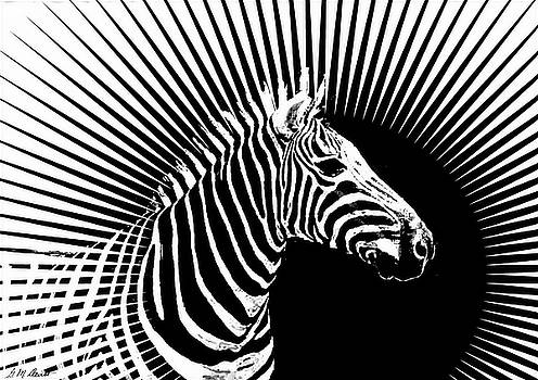 Zebra Dawn by Michael Durst