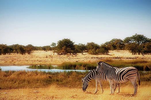 Sylvia J Zarco - Zebra dreams