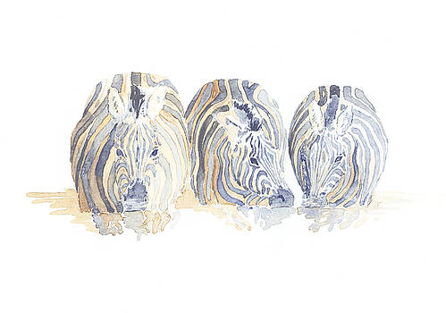 Zebra Drinking Field Sketch by Alison Nicholls
