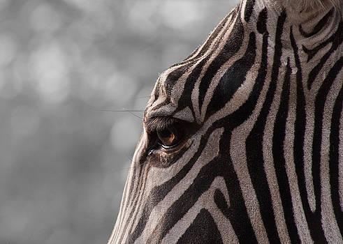 Zebra I by Svetlana Ledneva-Schukina