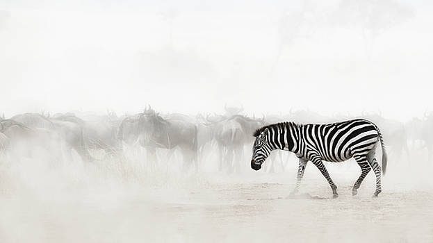 Susan Schmitz - Zebra in Dust of Africa