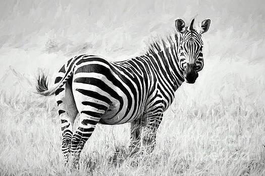 Zebra in the African Savanna by Pravine Chester
