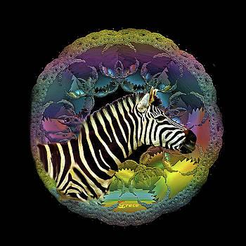 Zebra by Julie Grace