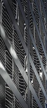 Zebra by KM Corcoran