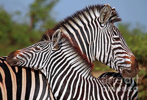 Zebra love, South Africa by Wibke W