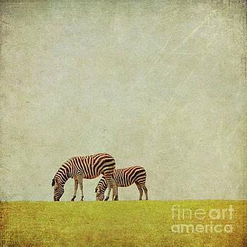 Zebra by Lyn Randle
