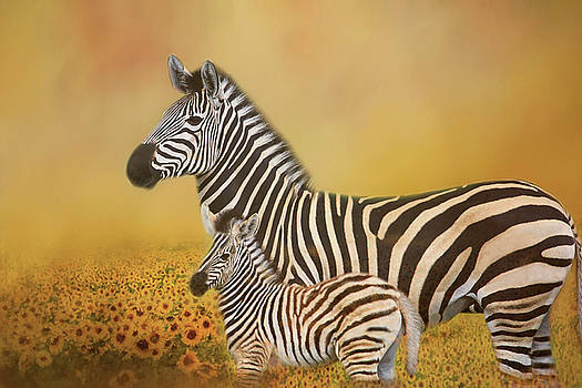 Zebra Mother and Child in Sunflower Field by Kay Kochenderfer