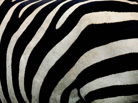 Zebra Pattern by Julie Pappas