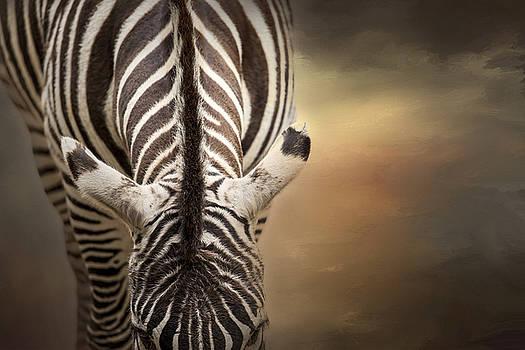 Zebra Patterns by Laura Greene