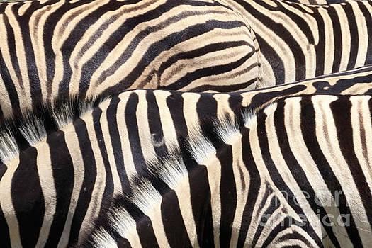 Zebra patterns by Tim Hauf