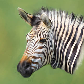 Zebra Portrait by Trevor Wintle