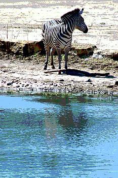 Zebra poster by Steve Karol
