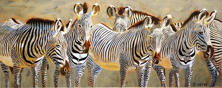 Zebra Herd by John Neeve