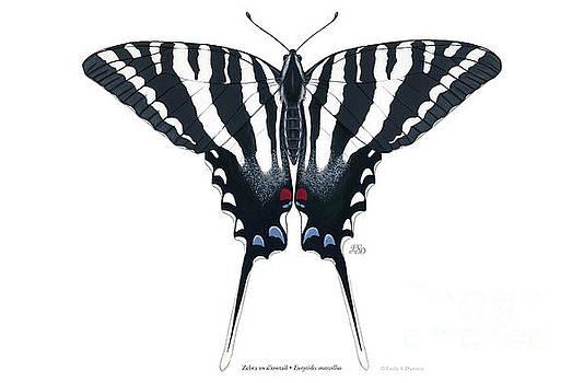 Zebra swallowtail by Emily Damstra