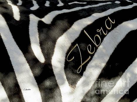 Zebra under the shadows by Claudia Ellis