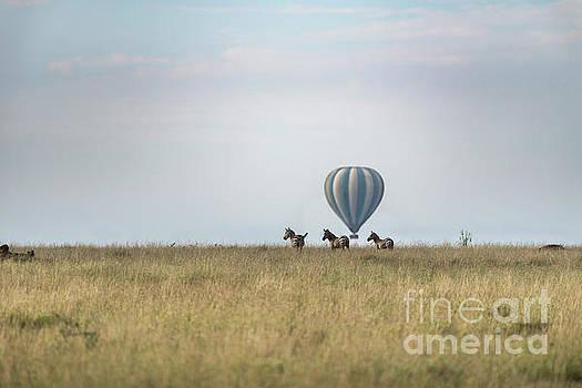 RicardMN Photography - Zebras and balloon on the horizon in Serengeti