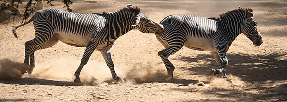 Paul W Sharpe Aka Wizard of Wonders - Zebras Bite