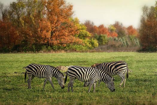 Zebras in Autumn by Victoria Winningham