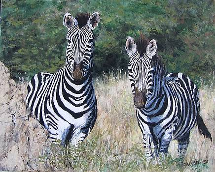 Zebras in South Africa by Jack Skinner