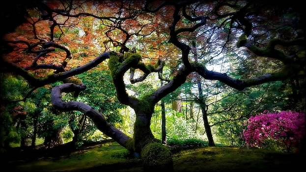 Zen by Clint Crawford