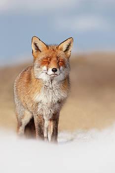 Zen Fox Series- Smiling Fox in the Snow by Roeselien Raimond
