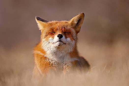 Zen Fox Series - Smiling Fox by Roeselien Raimond