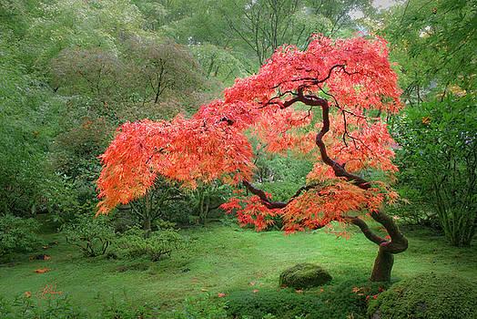 Zen Tree by Lori Grimmett