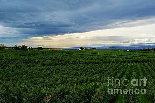 Zillah Orchard View by Mike Dawson
