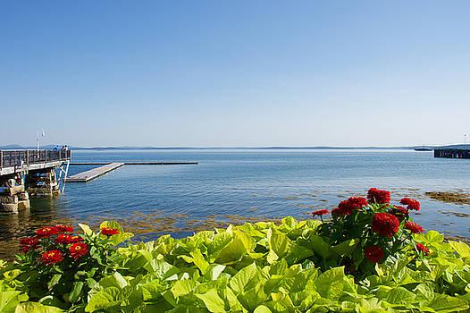 Zinias on the Bay by Chris Alberding