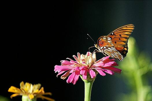 Zinnia and the Butterfly by Rosalin Moss