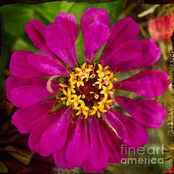 Zinnia flower by Ella Kaye Dickey