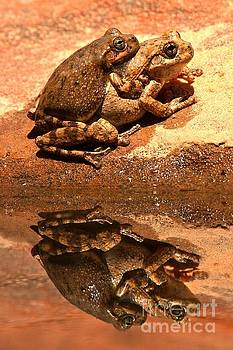Adam Jewell - Zion Canyon Tree Frogs In Love