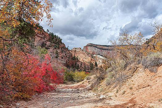 John M Bailey - Zion Fall Foliage