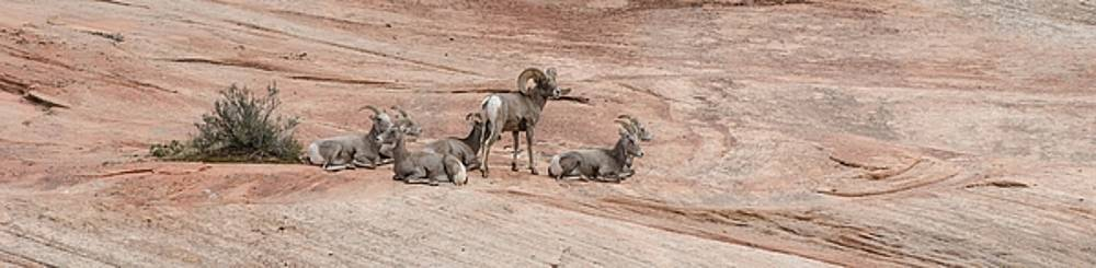 Zion Family by Jim Cook