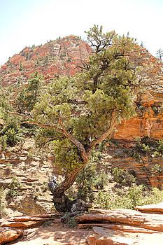 Robert Meyers-Lussier - Zion Hike 1 View 1