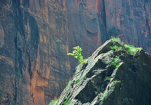 Zion Hope by Marcia Breznay