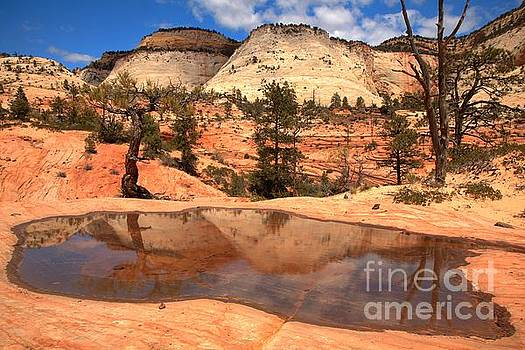 Adam Jewell - Zion National Park East Reflections