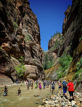 Ricky Barnard - Zion National Park II