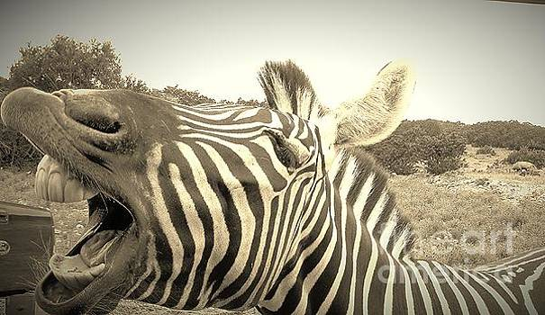 Zippy Zebra by Brigitte Emme