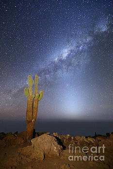 Zodiacal Light Milky Way and Giant Cactus Incahuasi Island Bolivia by James Brunker
