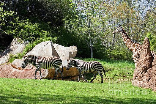 Jill Lang - Zoo Animals